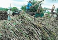 Sugar Development Fund